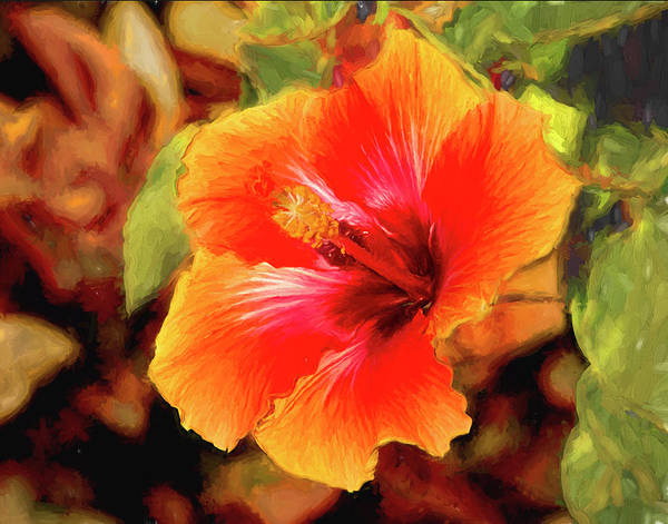 Photograph - Happy Hibiscus by Patricia Montgomery