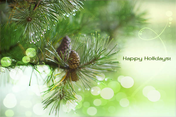 Pine Cones Photograph - Happy Holidays Too by Rebecca Cozart
