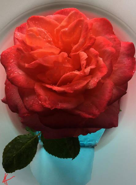 Photograph - Happy July Rose  by Colette V Hera  Guggenheim