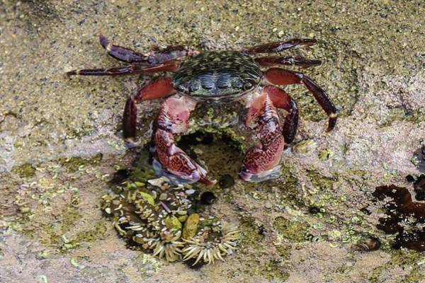 Photograph - Happy Little Crab by Brandy Little