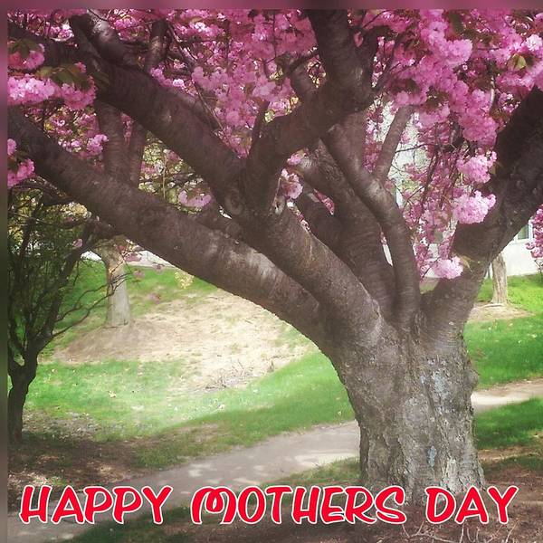 Photograph - Happy Mothers Day by Bc Adamkowski