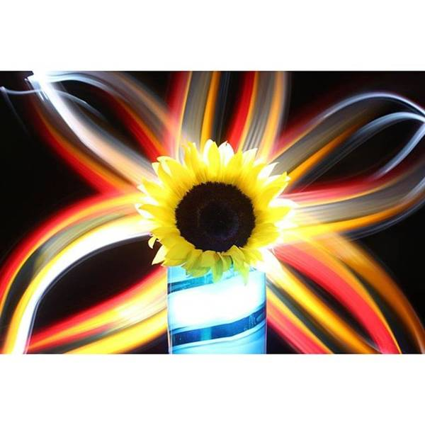 Sunflowers Wall Art - Photograph - Happy Saturday! Spring Is Near:) by Andrew Nourse