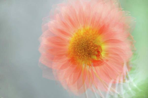 Photograph - Happy Single Wink by Jenny Rainbow