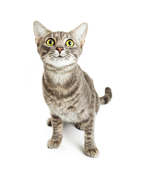 Photograph - Happy Smiling Young Cat Expressive Eyes by Susan Schmitz