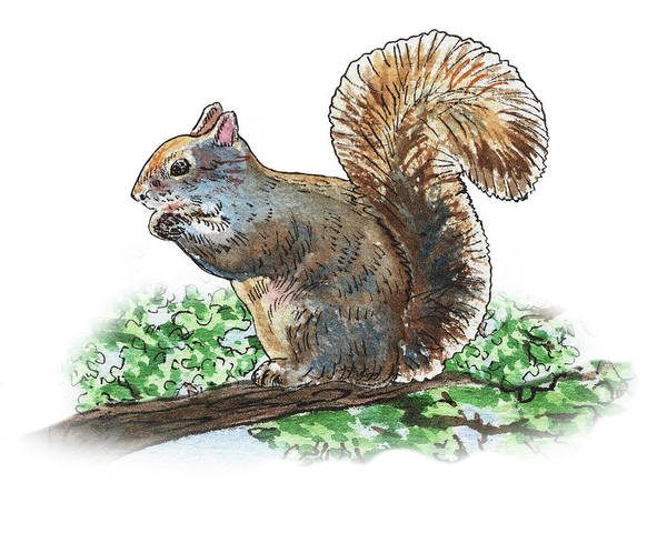 Painting - Happy Squirrel  by Irina Sztukowski