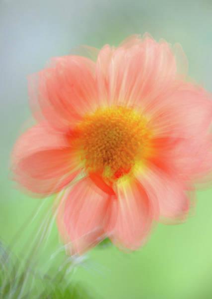 Photograph - Happy Summer by Jenny Rainbow