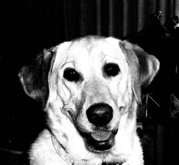 Photograph - Happy Tobie by Beth Akerman