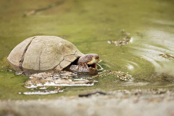Happy Turtle Art Print