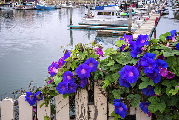 Photograph - Harbor Glory by Lynn Bauer