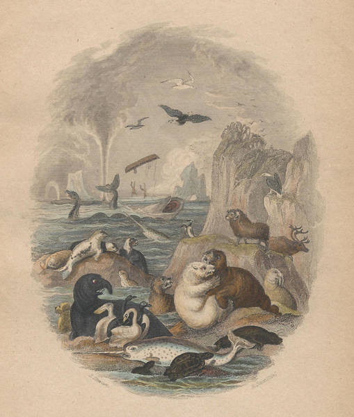 Illustrated Drawing - Harbor by Dreyer Wildlife Print Collections