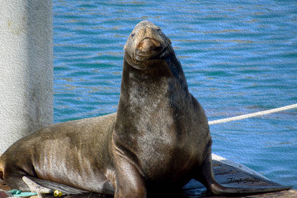Morro Bay Painting - Harbor Seal In Morro Bay by Floyd Snyder