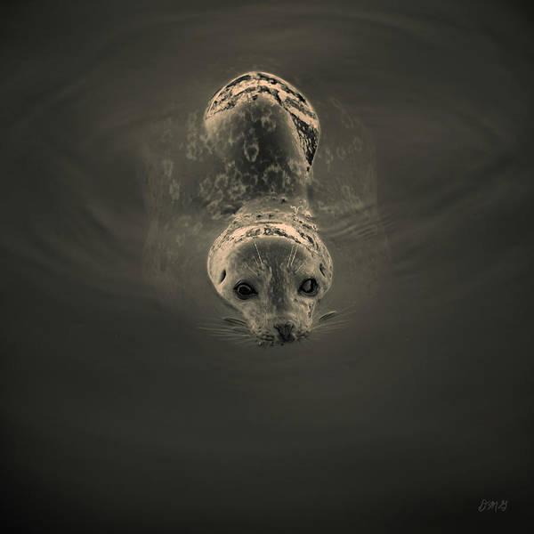 Photograph - Harbor Seal V Bw Sq Toned by David Gordon