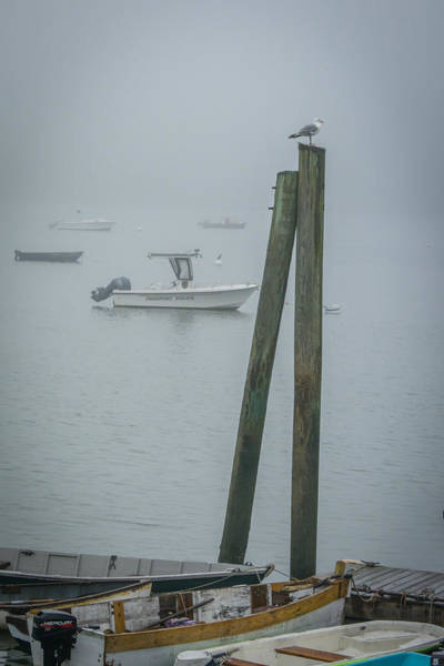Photograph - Harbormaster by Guy Whiteley