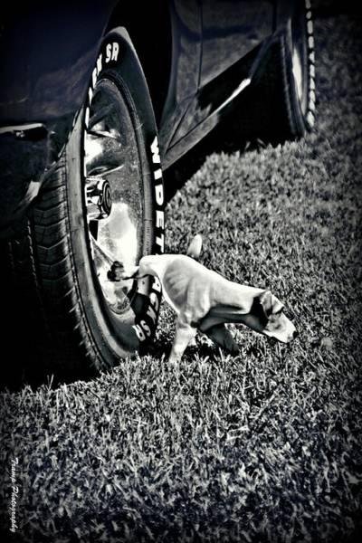 Photograph - Hard Day by Wesley Nesbitt