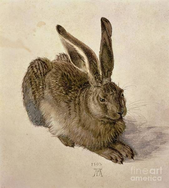Bunny Rabbit Wall Art - Painting - Hare by Albrecht Durer