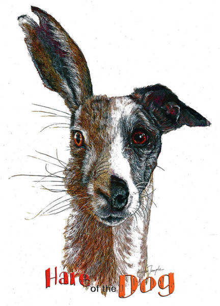 Wall Art - Digital Art - Hare Of The Dog by Leisa Temple