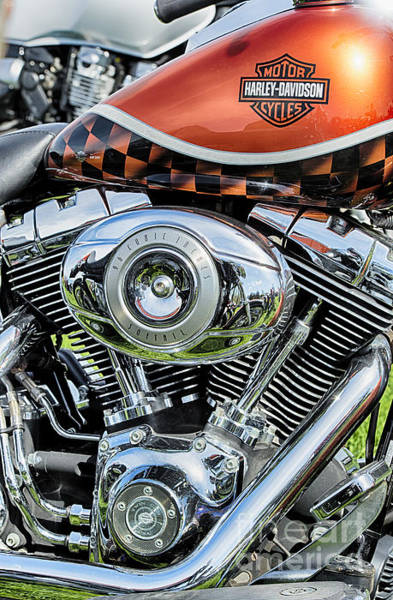 Checker Photograph - Harley Softail  by Tim Gainey