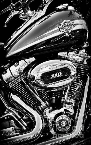 Wall Art - Photograph - Harley  by Tim Gainey
