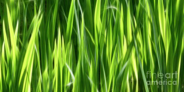 Photograph - Harmonious Lines by Brad Allen Fine Art