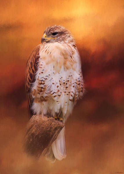 Painting - Harmony In Autumn - Bird Of Prey Art by Jordan Blackstone
