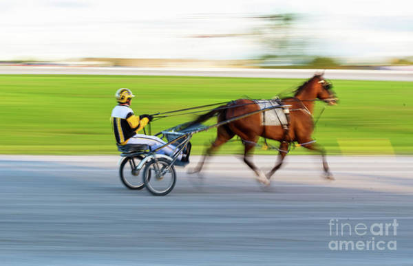 Photograph - Harness Racing by Les Palenik