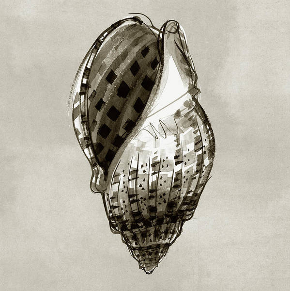 Painting - Harp Shell by Judith Kunzle