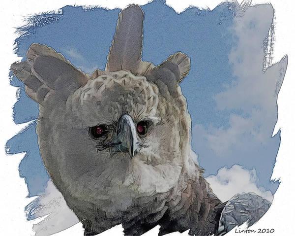 Belize Digital Art - Harpy Eagle Portrait by Larry Linton