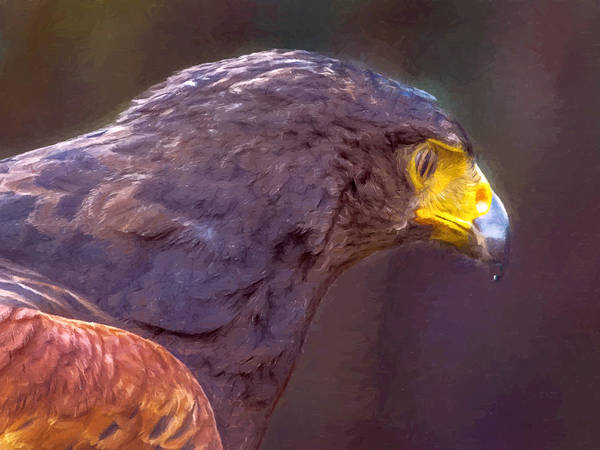 Painting - Harris Hawk Painting by Dr Bob and Nadine Johnston