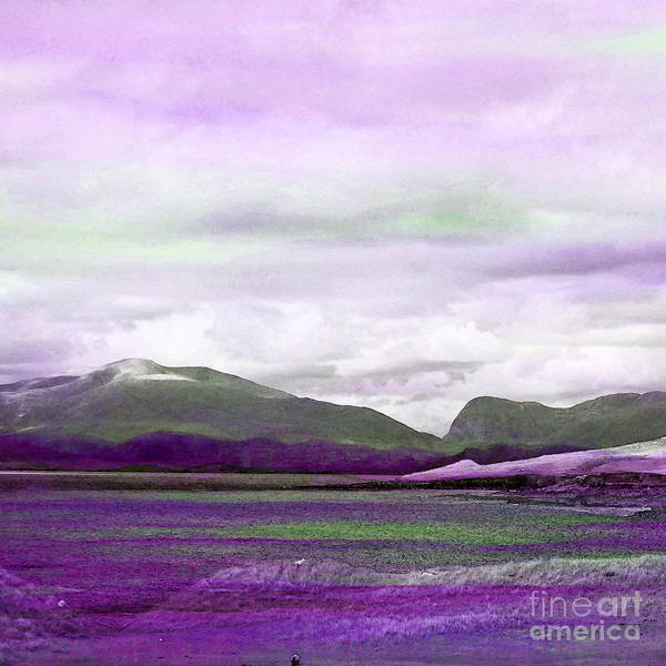 Painting - Harris In Violet by Tracy-Ann Marrison