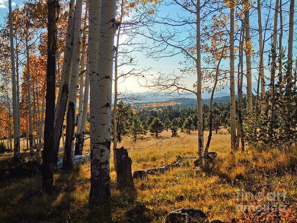 Photograph - Hart Prairie by Michael Smith-Sardior