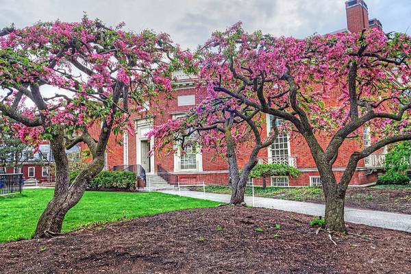 Photograph - Harvard Yard In The Spring Cambrisge Ma Harvard Yard by Toby McGuire