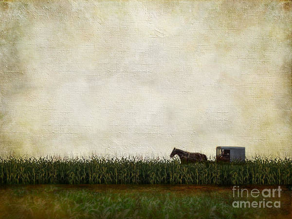 Corn Field Photograph - Harvest by AJ Yoder