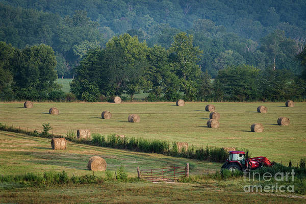 Photograph - Harvest by Andrea Silies