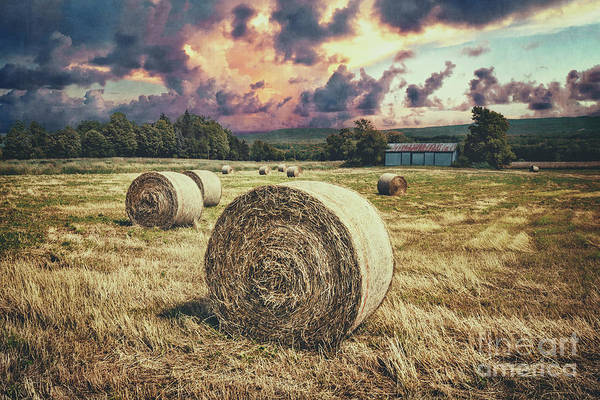Catskills Photograph - Harvest by Evelina Kremsdorf