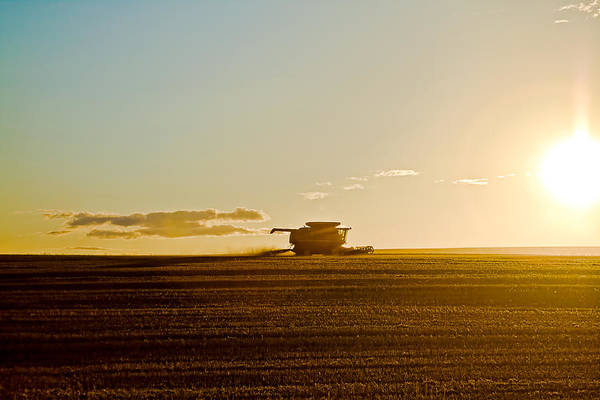 Wall Art - Photograph - Harvest by Gary Smith