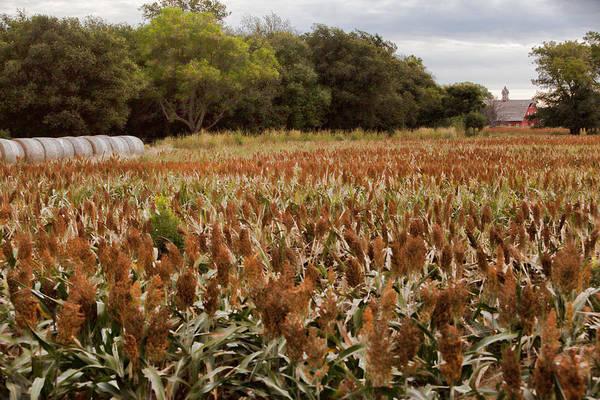 Photograph - Harvest by Jonas Wingfield