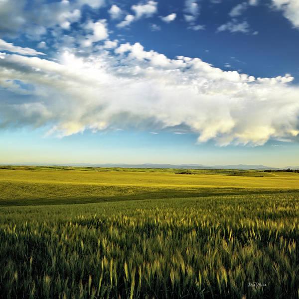 Photograph - Harvest by Leland D Howard