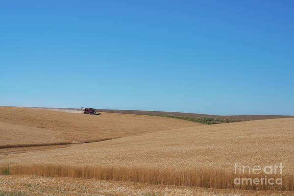 Wall Art - Photograph - Harvest  by Michael Ver Sprill