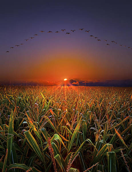 Natur Wall Art - Photograph - Harvest Migration by Phil Koch
