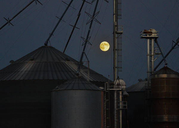 Photograph - Harvest Moon by Carl Young
