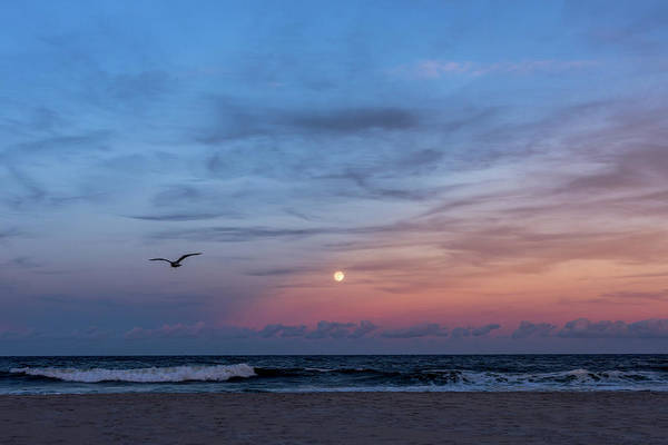Photograph - Harvest Moon Rising 2016 Lavallette Nj by Terry DeLuco