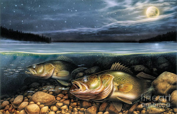 Bait Wall Art - Painting - Harvest Moon Walleye 1 by JQ Licensing