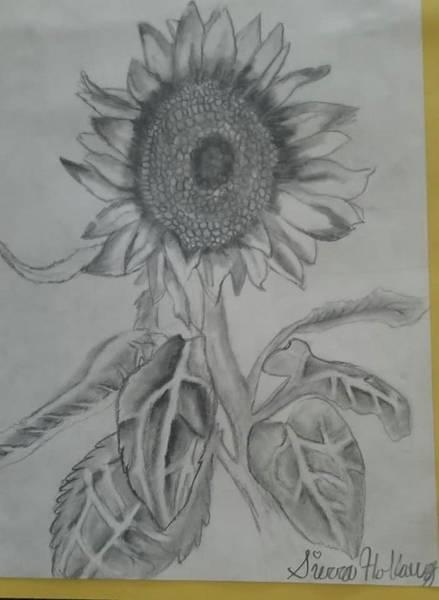 Sunflower Seeds Drawing - Harvest Sunflower by Sierra Holloway