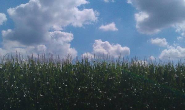 Photograph - Harvest Time by Bc Adamkowski