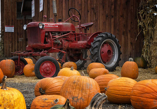 Wall Art - Photograph - Harvest Time by Betty Depee
