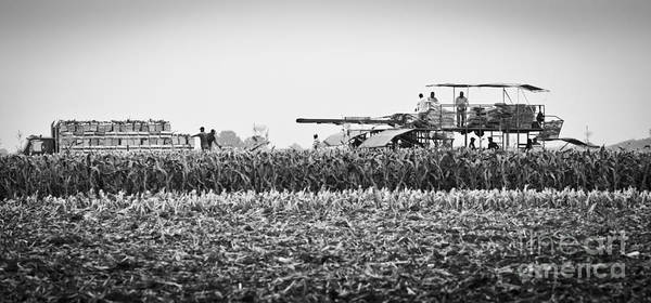 Photograph - Harvest Time On The Farm by Ricky L Jones