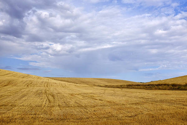 Photograph - Harvested Wheat Field by Fabrizio Troiani