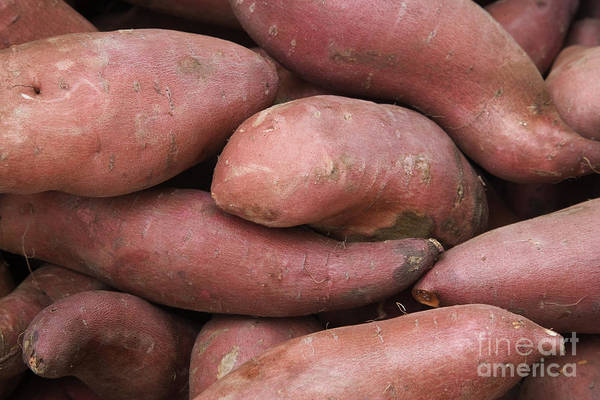 Convolvulaceae Wall Art - Photograph - Harvested Yams by Inga Spence
