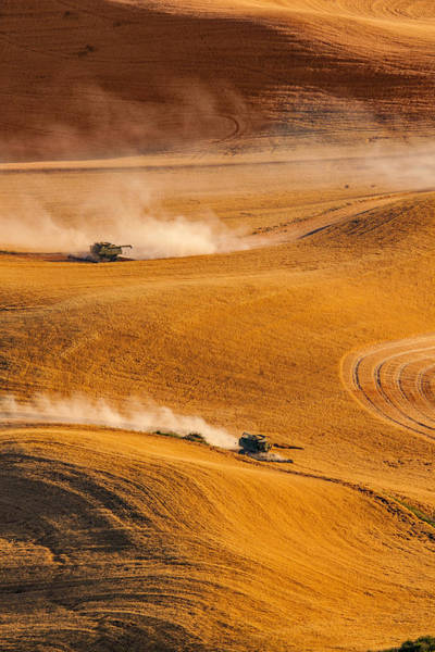 Photograph - Harvesting by Mary Jo Allen