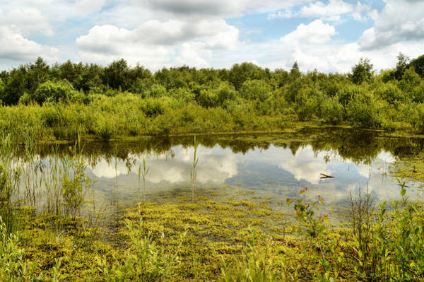 Photograph - Hatfield Moors by Sarah Couzens